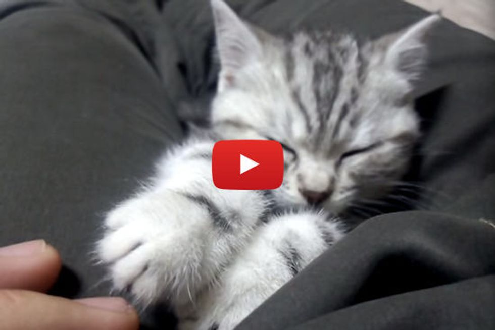Sleepy Kitty Still Wants To Play