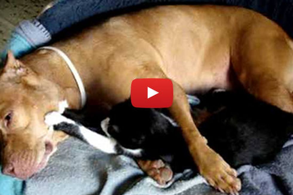 Kitty Gives Doggie A Massage - Cutest Friends