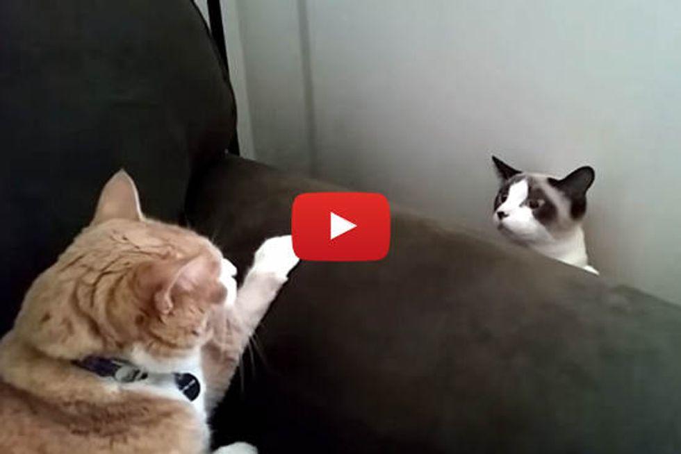 Kitties First Meeting