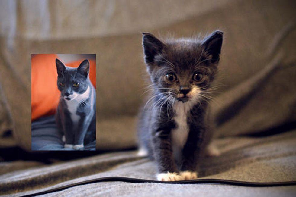 Drogo The Tiny Orphan Kitten: Then & Now
