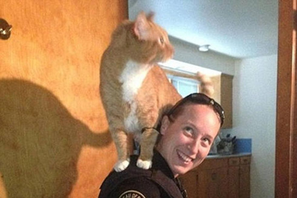 Cat Decides To Help Police Officer Look For Burglar