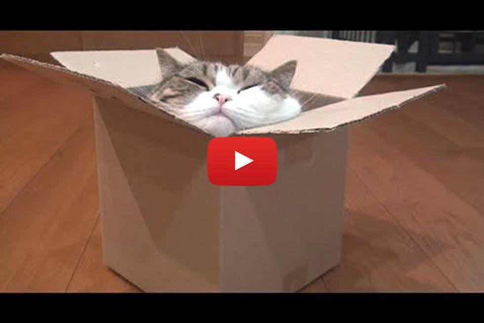 Maru And Box