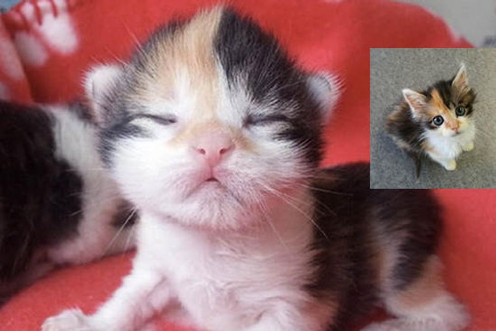 Cali The Orphan Kitten Saved By A Vet