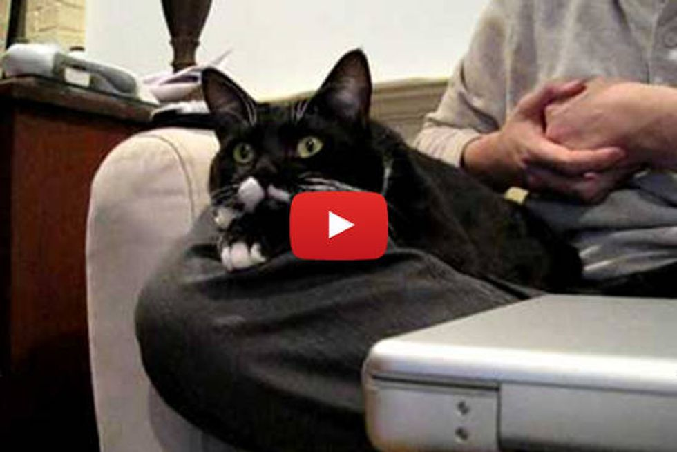 Waldorf The Cat Watches Discovery Channel With His Humans