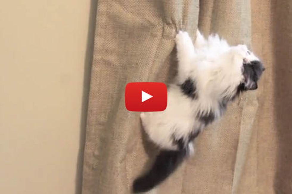 Kitten Climbs Like a Monkey