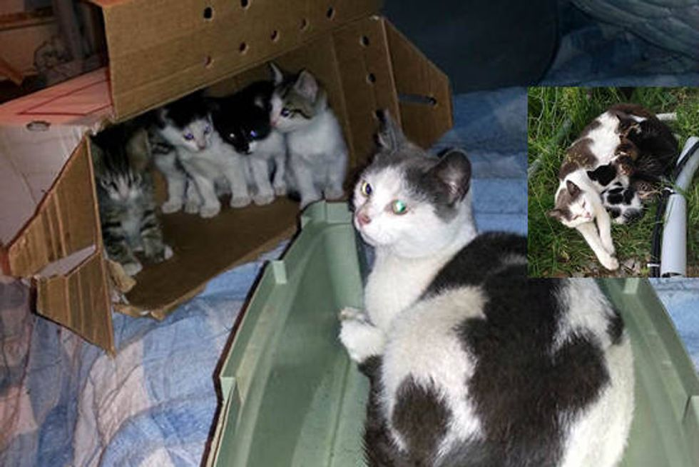 Feral Family Of Six Found A Second Chance