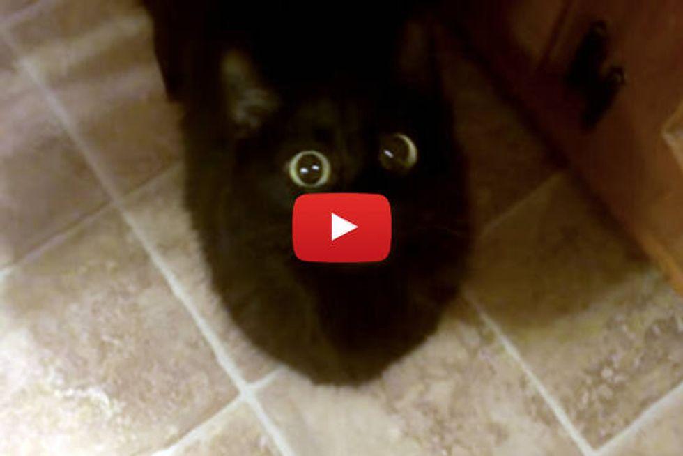 Nanu The Meeping Cat
