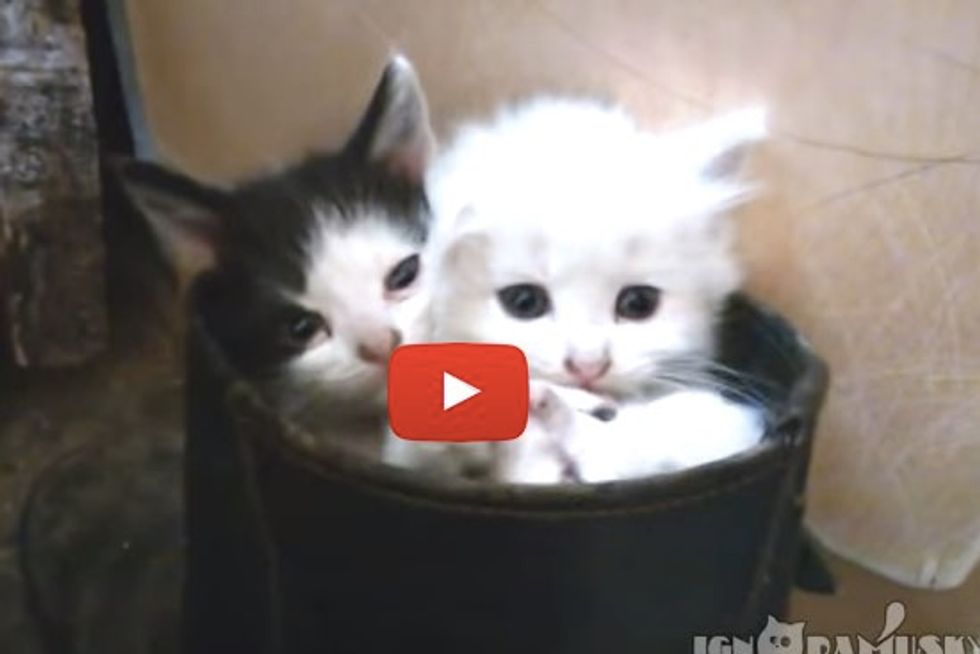 Kitties In Boot