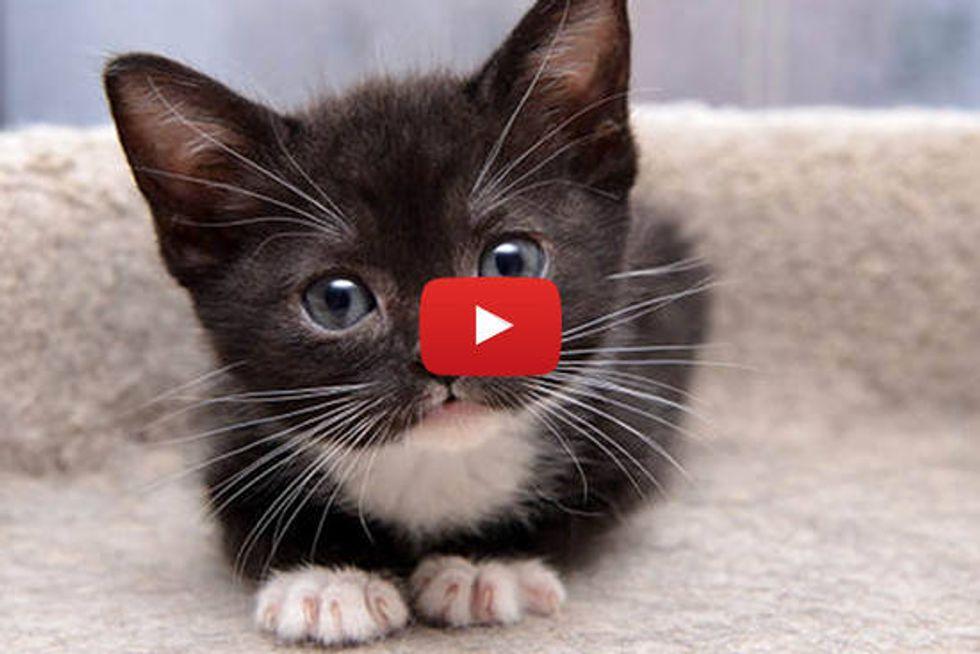 Tiny Kitty Maggie