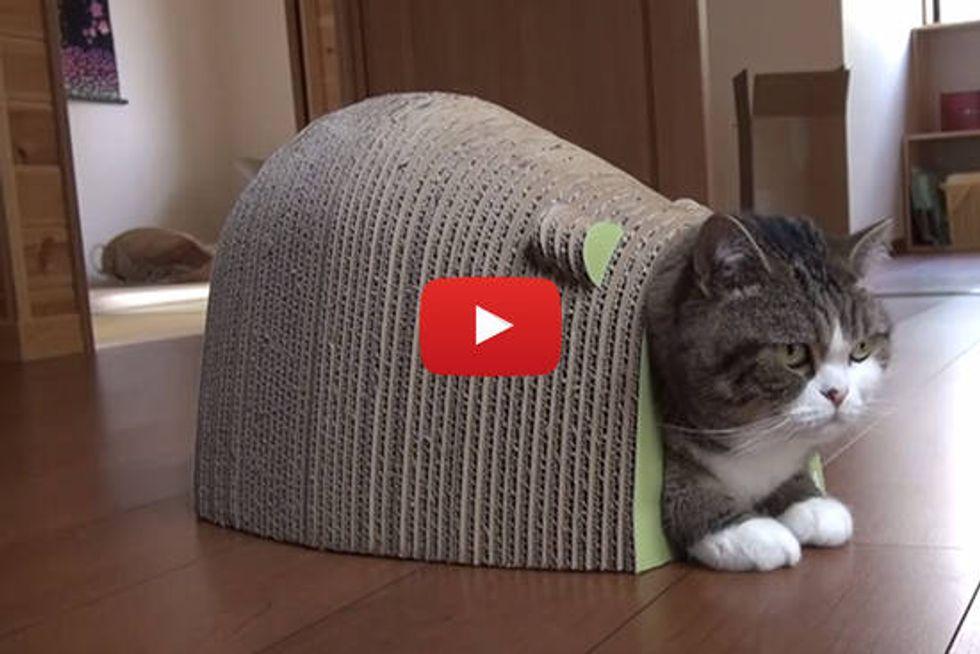 Maru, Hana And Mouse-shaped Kitty Scratcher