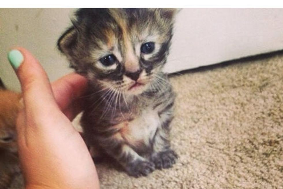 Adorable Kitten With Frowny Face