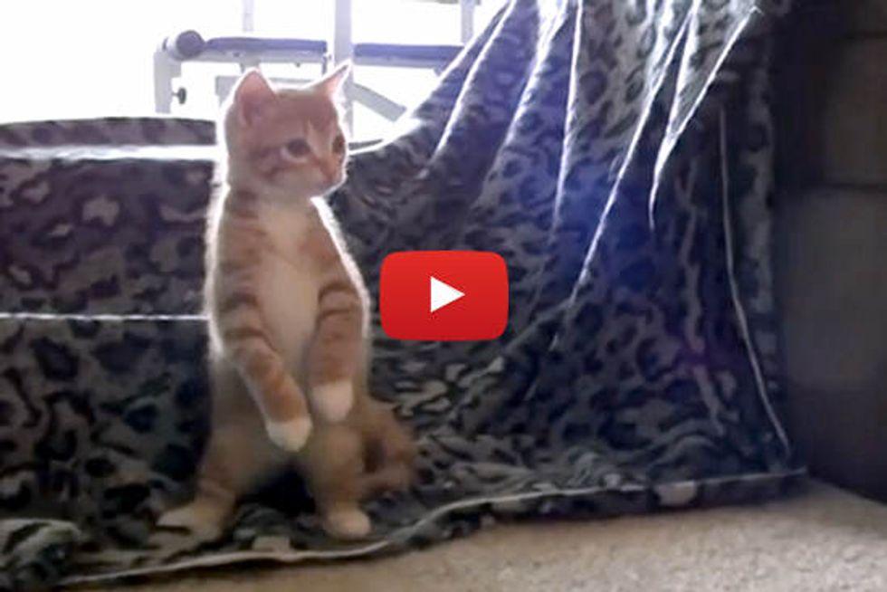 10 Cutest Kitten Moments