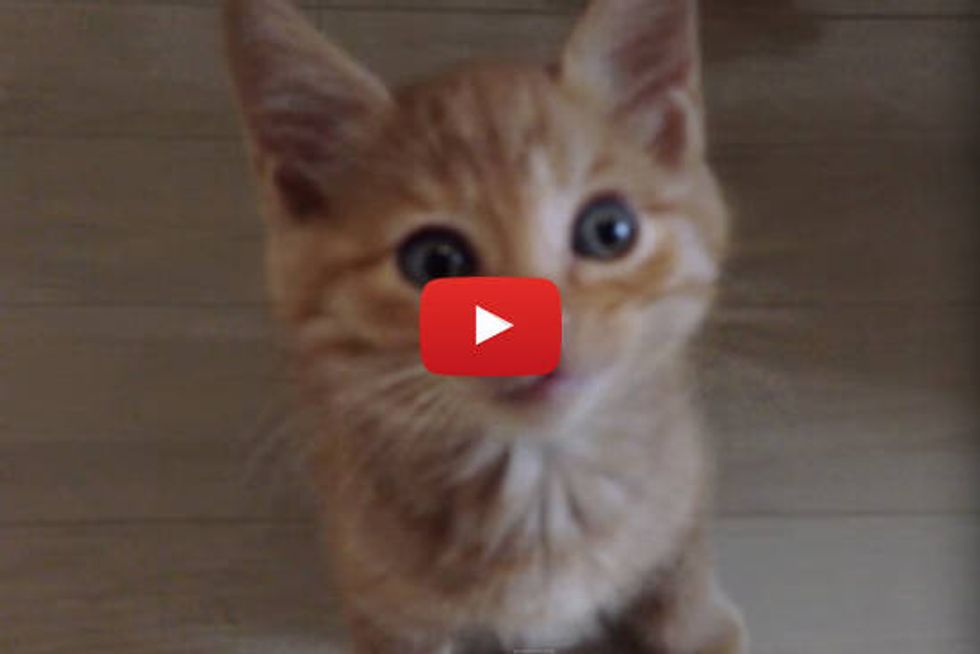 Kitten Welcomes Dad Home