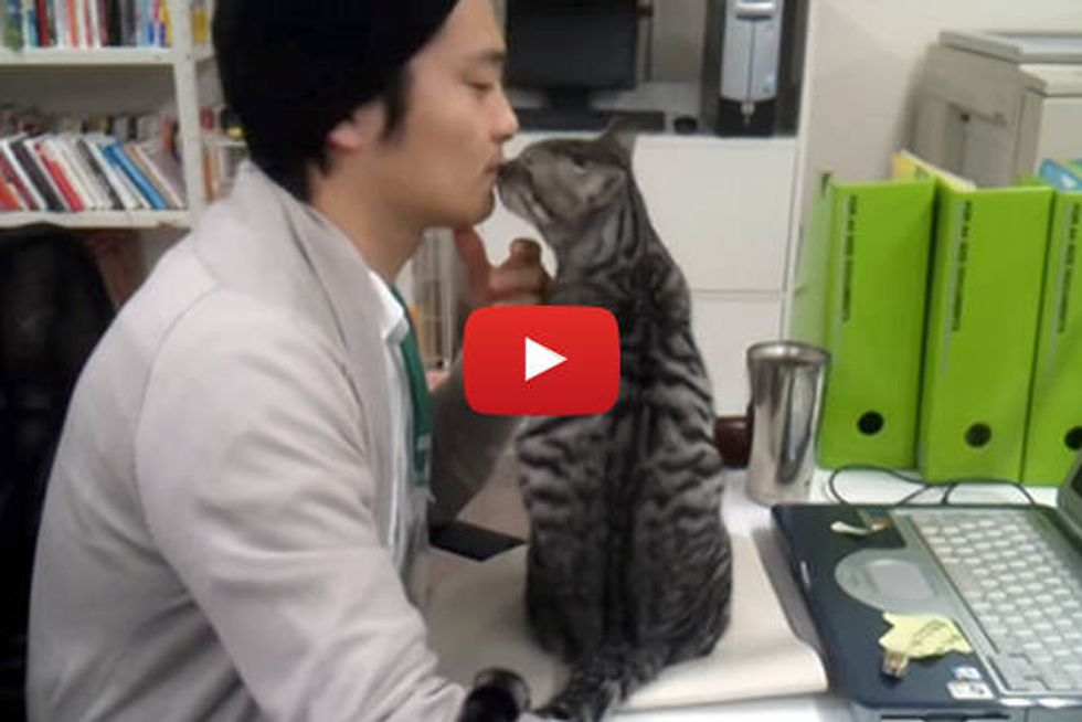 Rescue Cats, Monta And Nobita, Become Office Cats