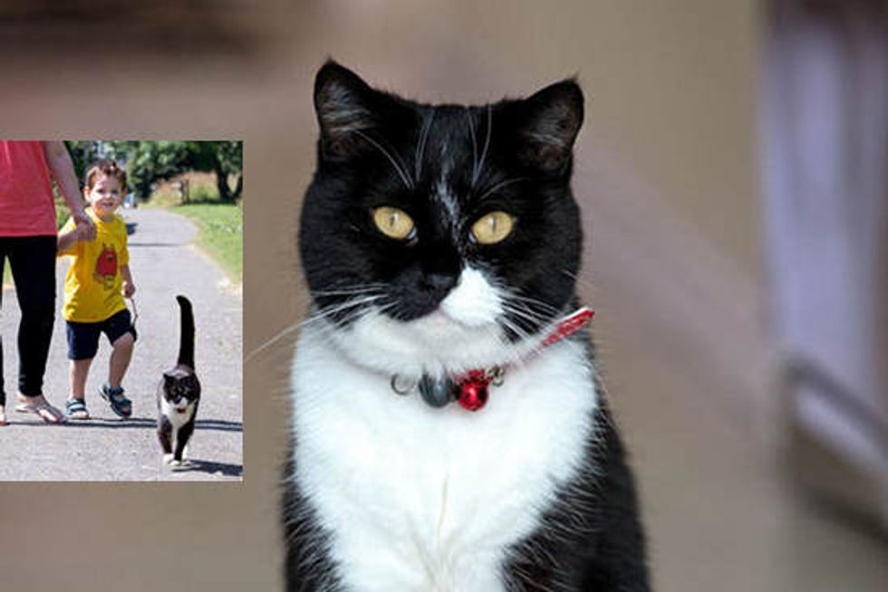 Caring Cat Walks Three-year-old Boy To School To Ease Anxiety