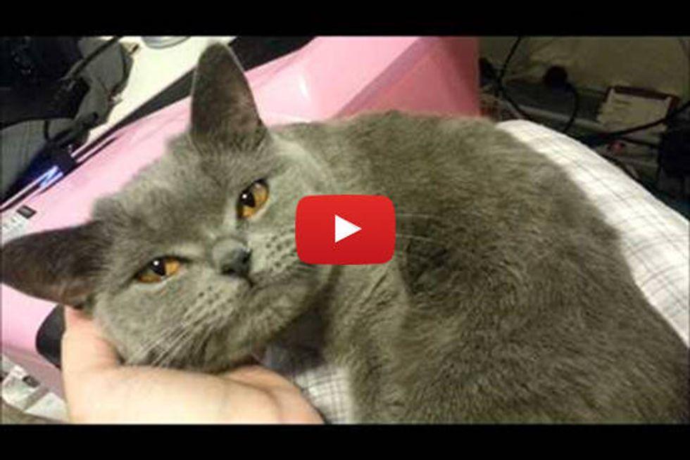 Amoni The Cat Loves To Talk