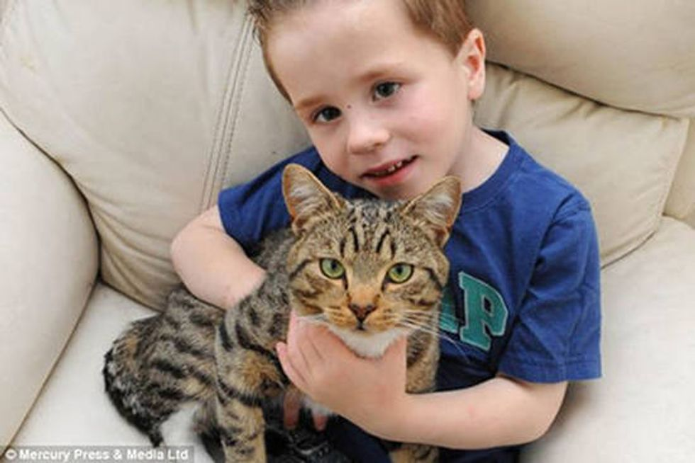 Heroic Cat Rescues 5 Year Old Boy From Bullies