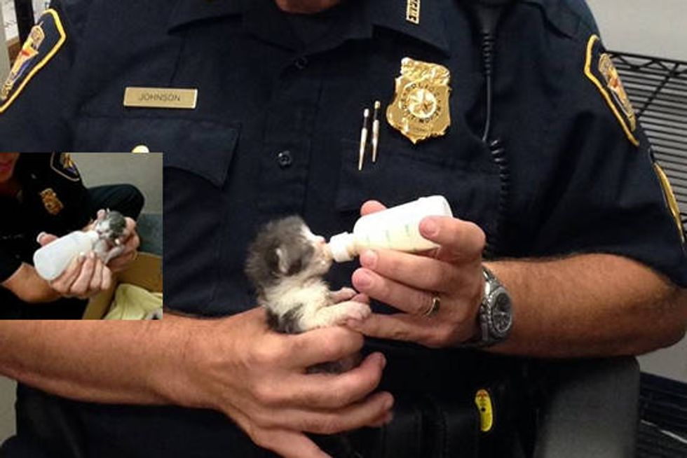 Police Officers Rescued Kittens And Are Caring For Them