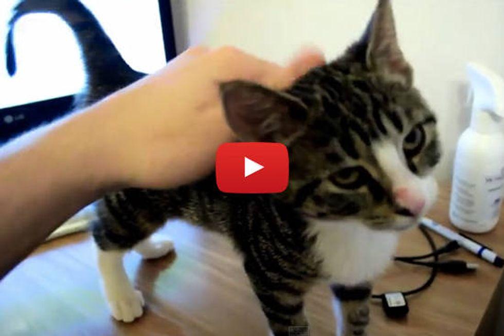 Squeaky Meowing & Purring Kitten