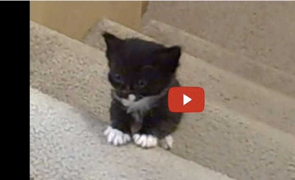 Tiny Kittens Taking First Steps Up the Stairs