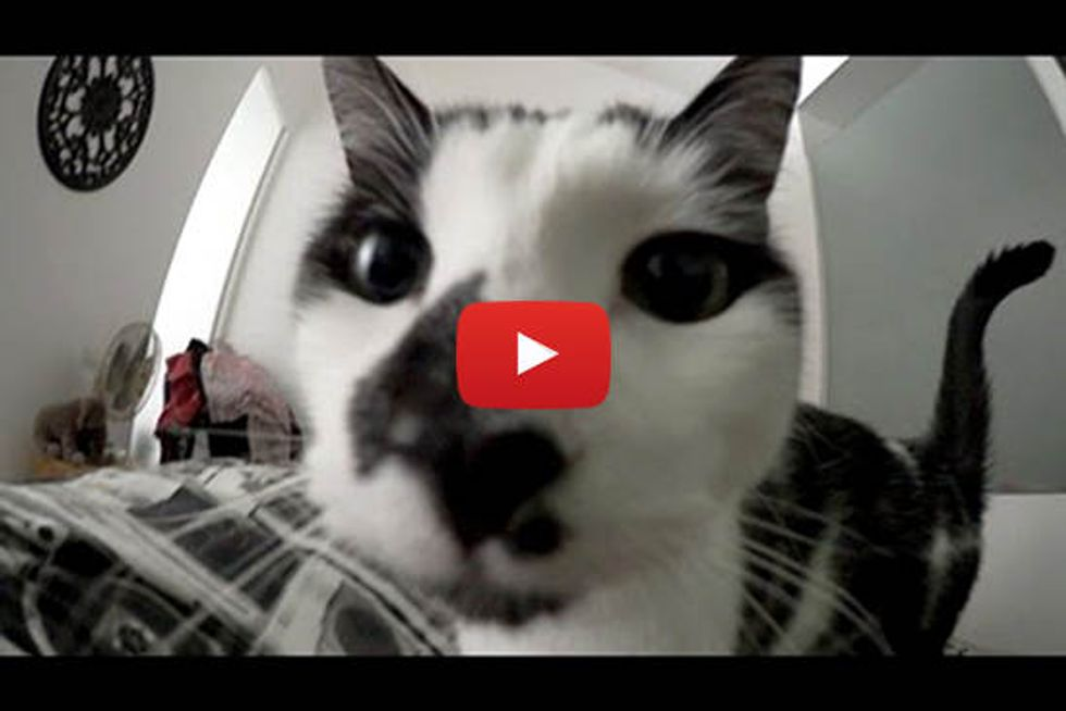 What It's Like To Be Woken Up By A Cat