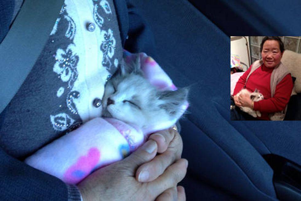 Grandma And Her Kitten
