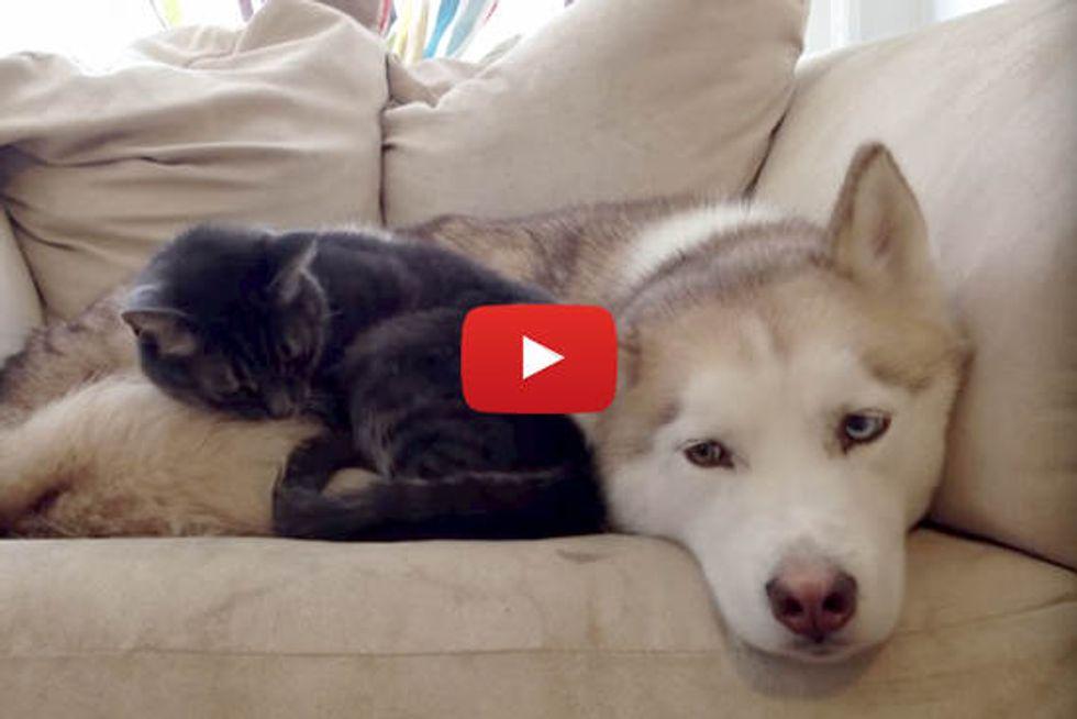 Warm Bed For A Cat = Sleepy Husky