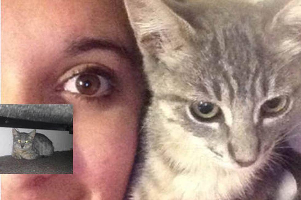 Feral Cat Found Trust & Love