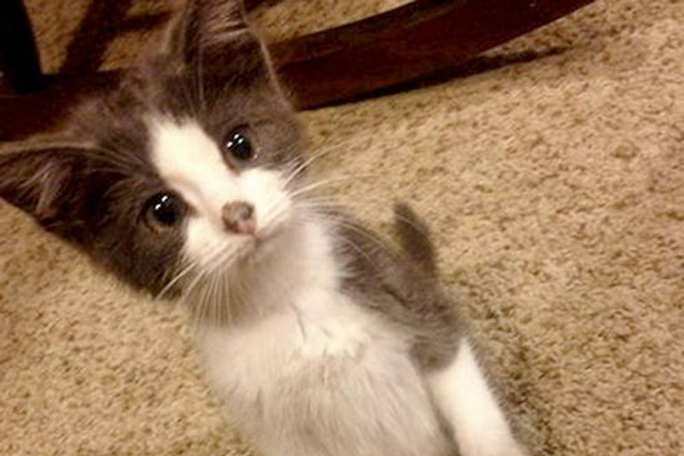 Smokey The Kitty Rescued From Burned Building