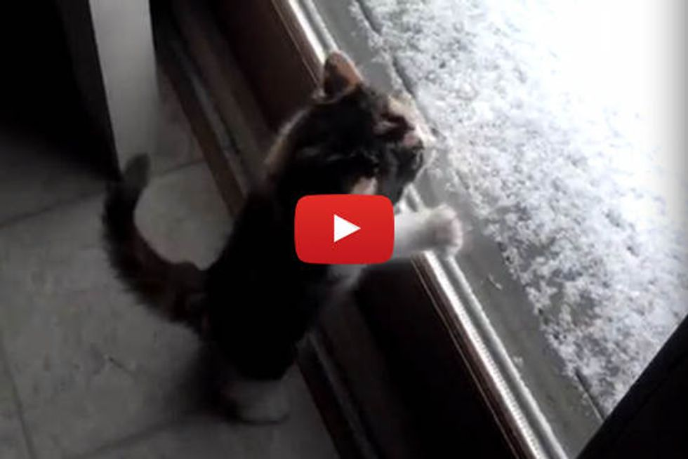 Kitten Excited To See Snow