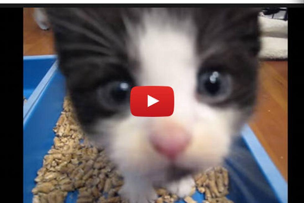 Foster Kittens Playtime!