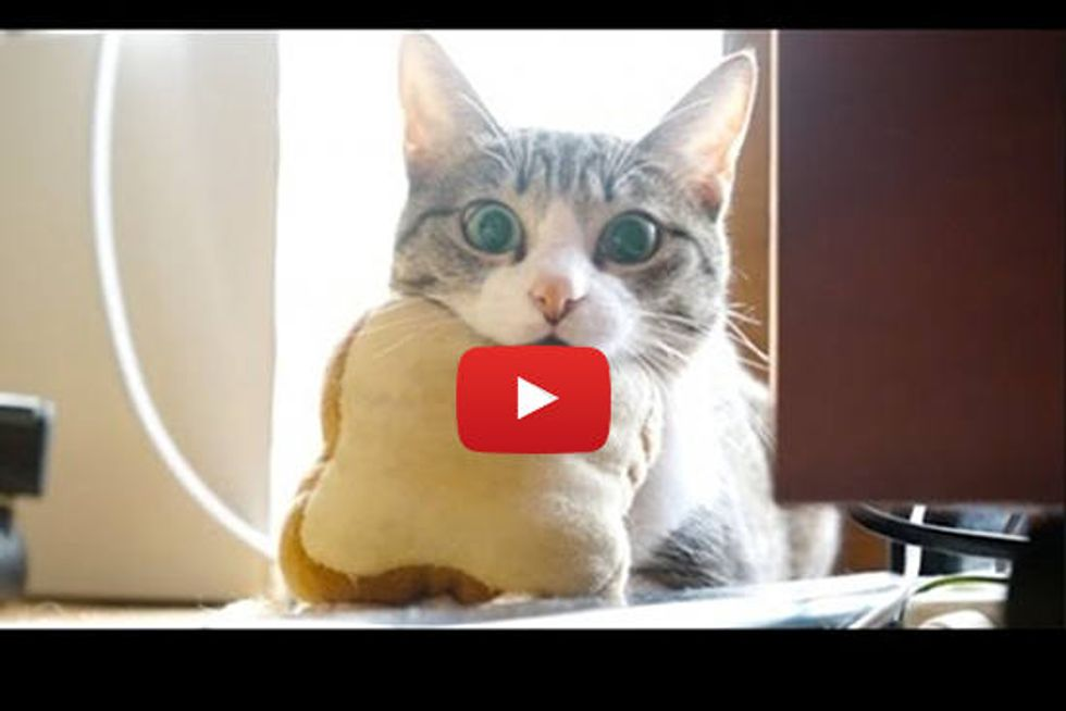Kitty And Her Bread Pillow