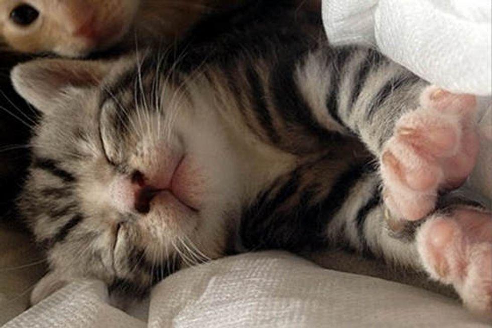 What Fostering Feels Like. Meet Charles Xavier The Kitten