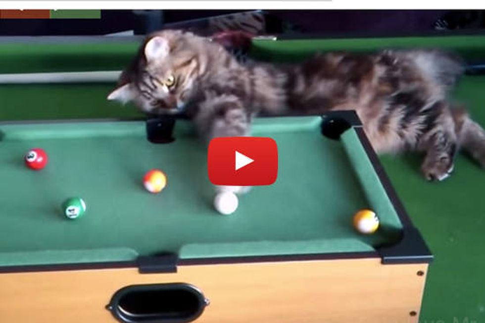 Cats Playing Pool