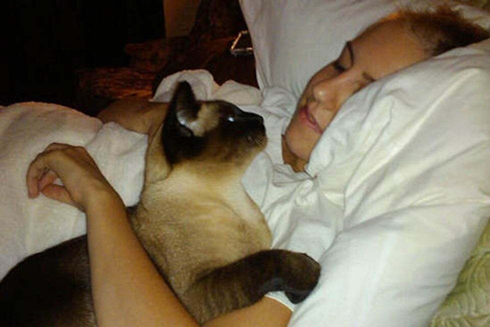 Stevie The Cat Cuddles Her Human After Chemo Treatment