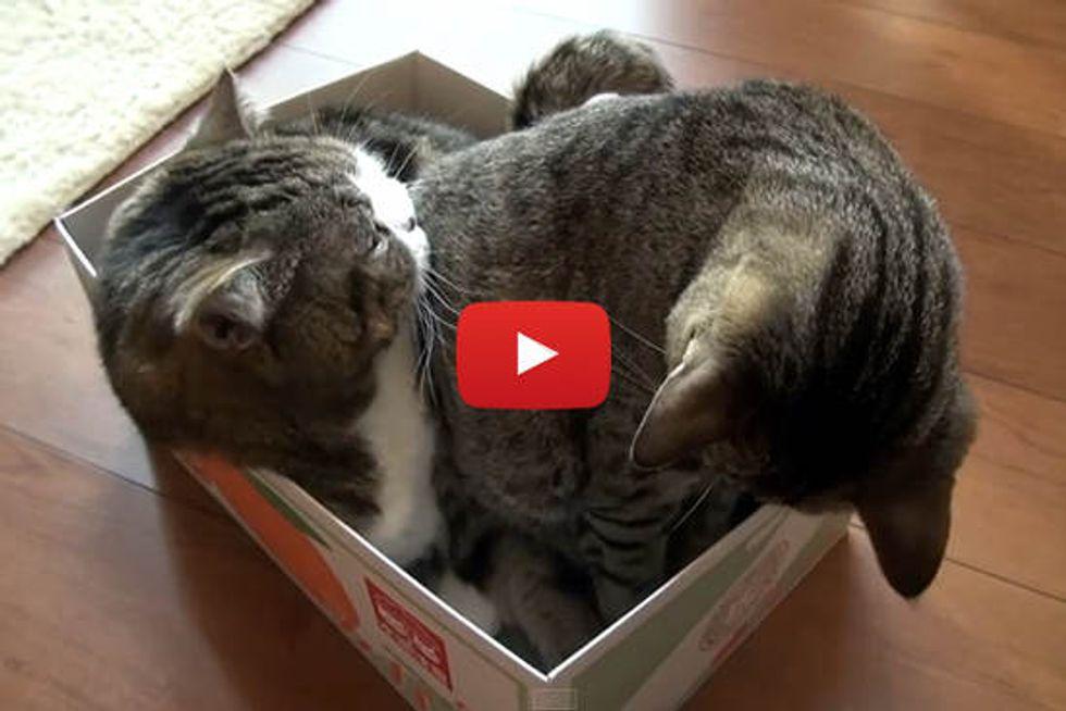 Maru & Hana In A Box