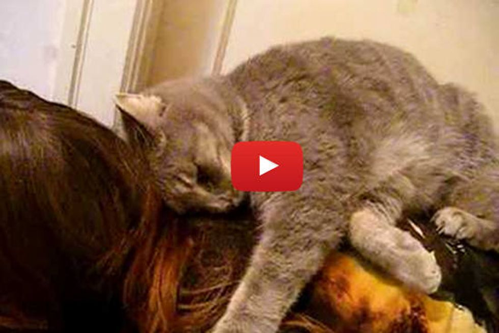 Kitty Can't Get Enough Of Her Human Friend