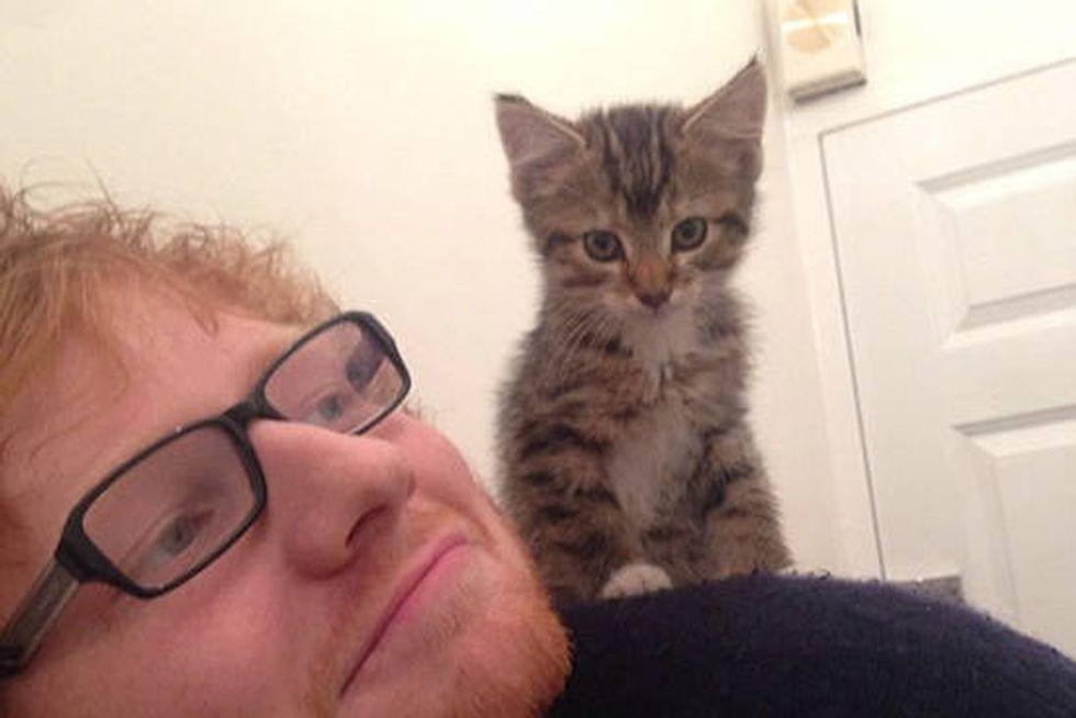 Graham The Cat