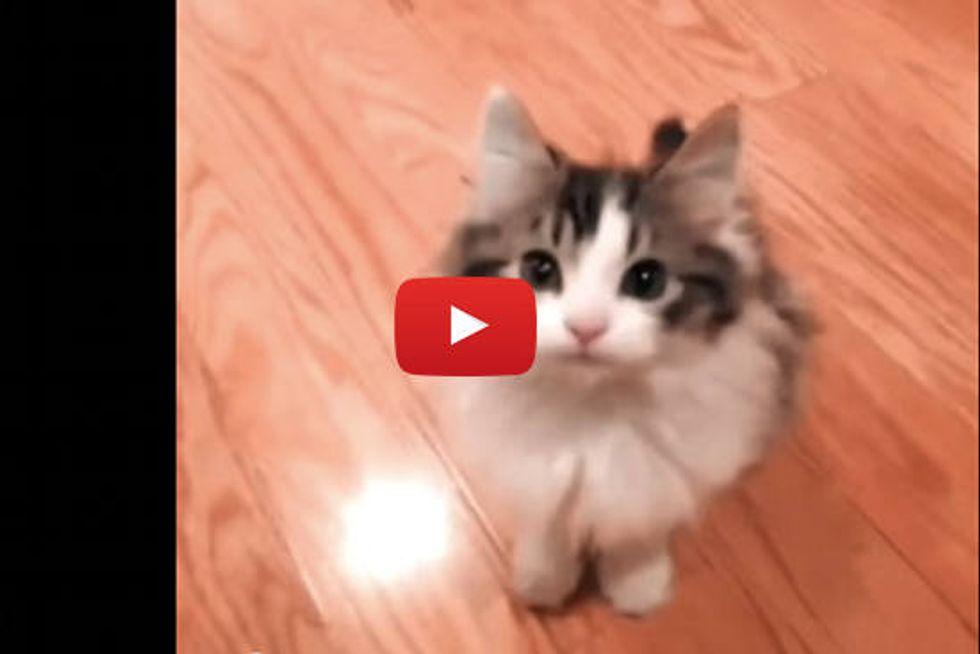 Kitten Says Hi