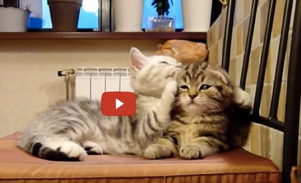 These Two Kitty Buddies Adore Each Other. Be Prepared to Aww!