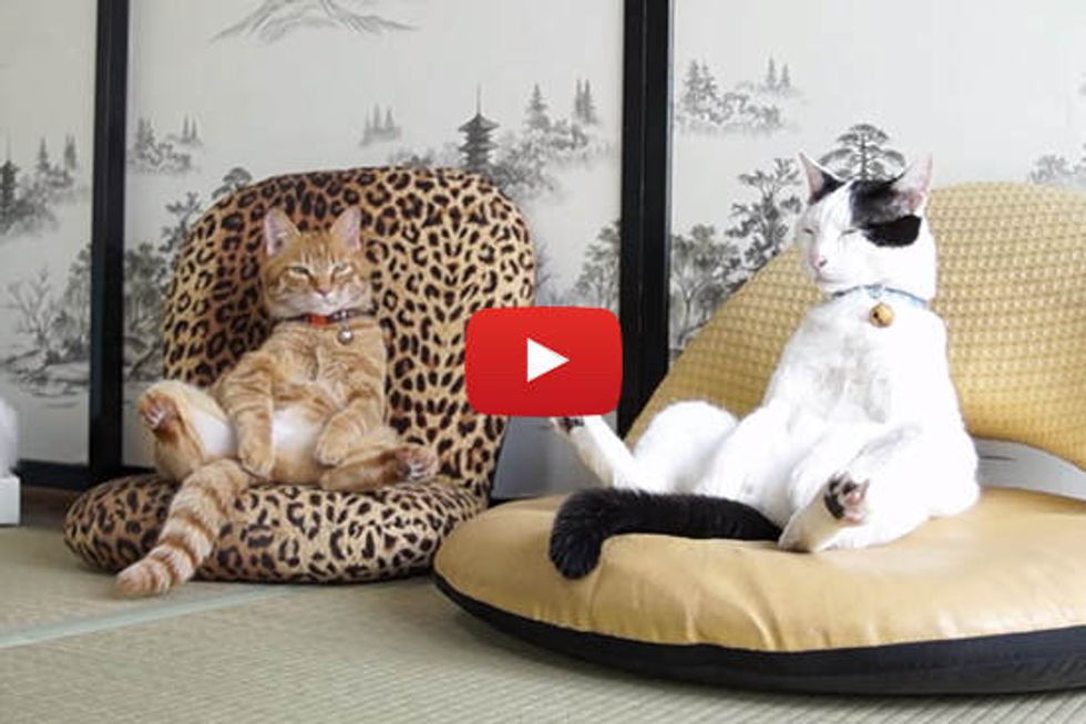 Cats Sitting In Chairs