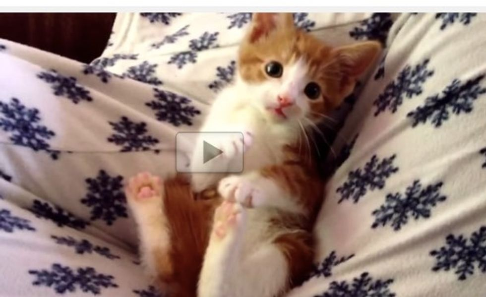 Oscar's Serious Kitten Cuteness Will Make You Smile!
