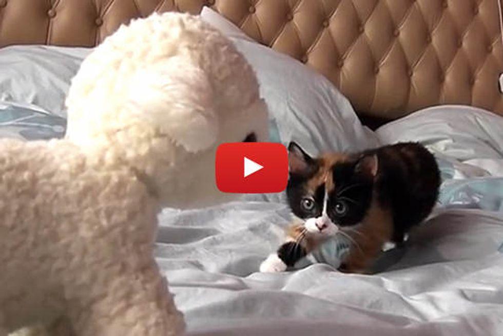 Kitten Sneaking