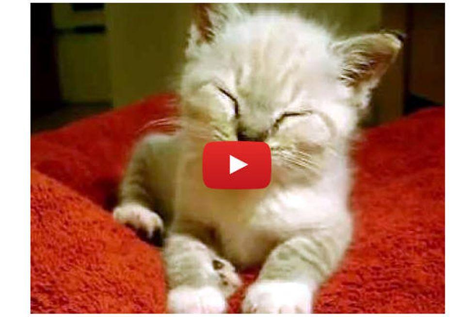 Cute Kitten Falling Asleep