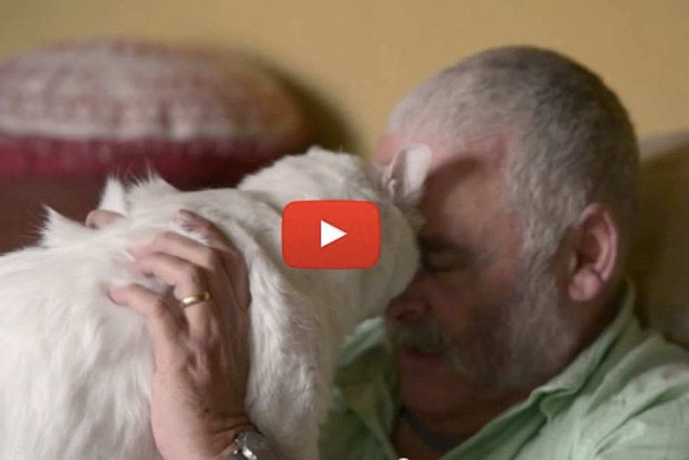 Elisas The Caring Cat Helps His Veteran Dad From PTSD