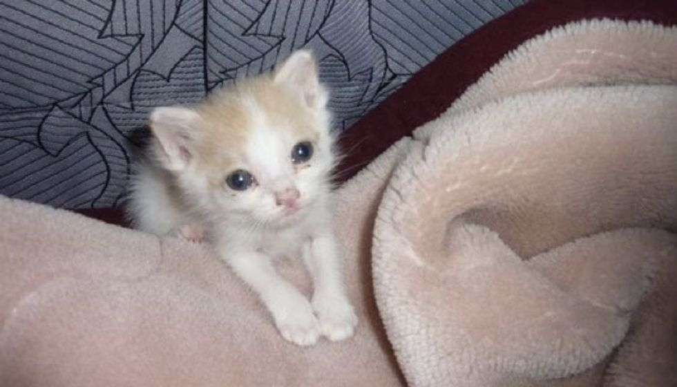 Young Boy Saves Kitten and Changes His Life Forever!