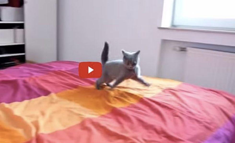 Kitten Loves Her 'New' Bed
