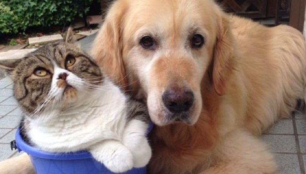 Cat and Her Golden Retriever Dog Share an Inseparable Bond