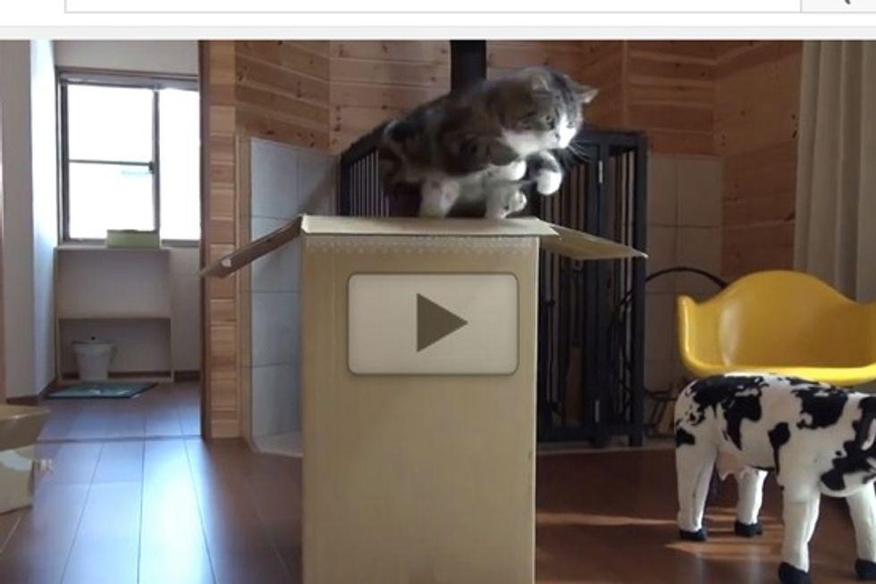 Maru Teaches Hana To Jump In Large Box