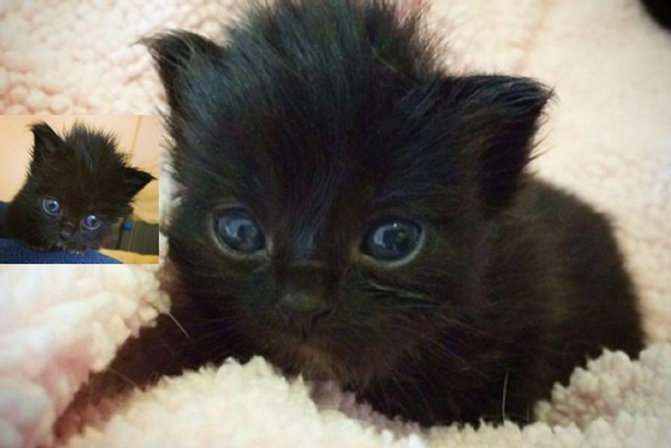 Gatsby The Beautiful Black Cat